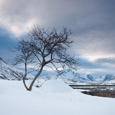 Lonely tree at the shore of Selfjord