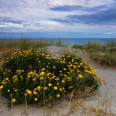 Flowers on the beach of Puerto Madrin