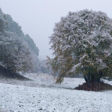Early snow 1
