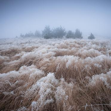 Frosty grass in the fog
