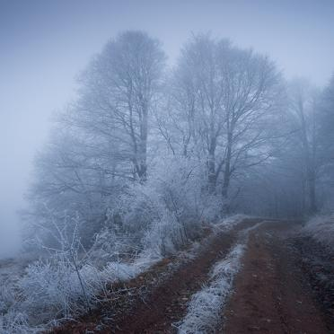 Frosty trees in the fog