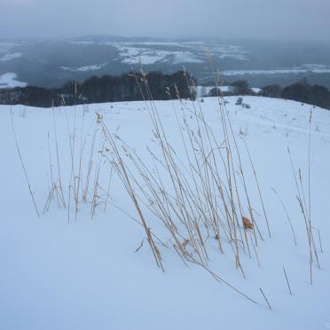 Grass in the snow
